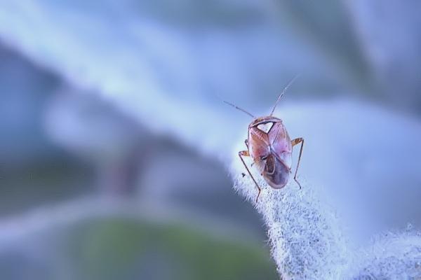 Makroaufnahme eines Insekts